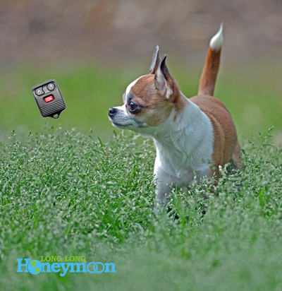 Our favorite chihuahua gazes upon a floating keyless remote. Because all photos are better with dogs. (Click the pic for more info.)